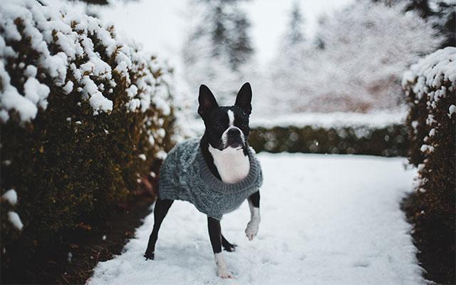 Pasja zimska oblačila
